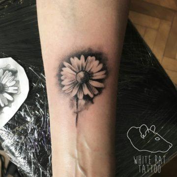 Studio tatuażu Warszawa Krzysztof Jakubowski tatuaż stokrotka