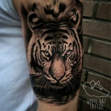 Studio tatuażu Warszawa Krzysztof Jakubowski tatuaż tygrys 2