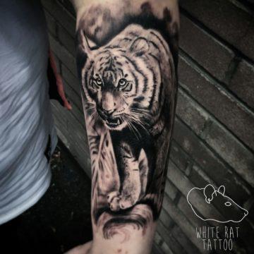 Studio tatuażu Warszawa Krzysztof Jakubowski tatuaż tygrys