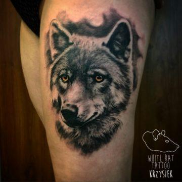 Studio tatuażu Warszawa Krzysztof Jakubowski tatuaż wilk 3