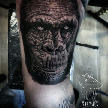 studio-tatuazu-warszawa-krzysztof-jakubowski-tatuaz-goryl