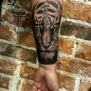 studio-tatuazu-warszawa-krzysztof-jakubowski-tatuaz-tygrys