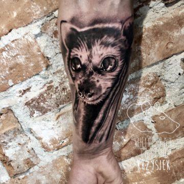 Krzysztof Jakubowski Studio Tatuażu Warszawa White Rat Tattoo Tatuaż Nietoperza