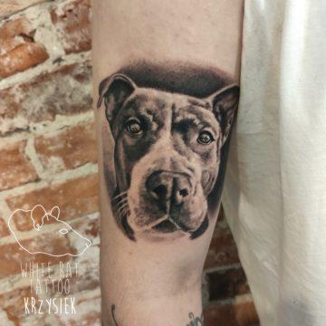 Krzysztof Jakubowski Studio Tatuażu Warszawa White Rat Tattoo Tatuaż Psa