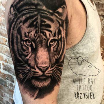 Krzysztof Jakubowski Studio Tatuażu Warszawa White Rat Tattoo Tatuaż Tygrys (3)