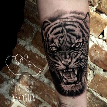 Krzysztof Jakubowski Studio Tatuażu Warszawa White Rat Tattoo Tatuaż Tygrys