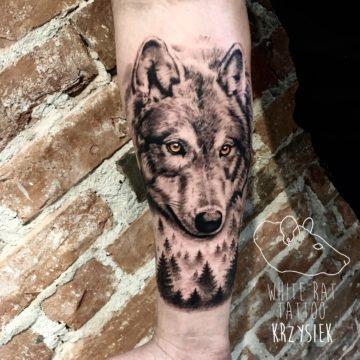 Krzysztof Jakubowski Studio Tatuażu Warszawa White Rat Tattoo Tatuaż Wilk z Lasem