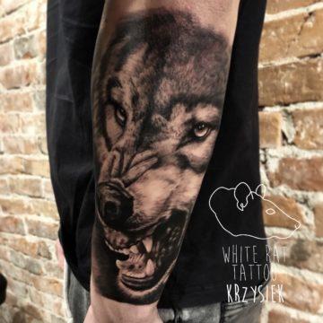 Krzysztof Jakubowski Studio Tatuażu Warszawa White Rat Tattoo Tatuaż Wilka (2)