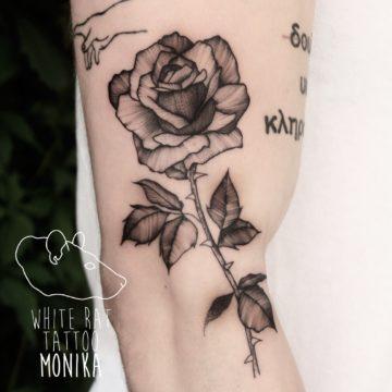 Monika Michniewicz Studio Tatuażu Warszawa White Rat Tattoo Tatuaż Róża